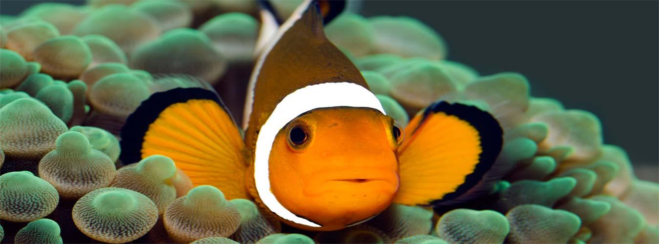 slider-fish5