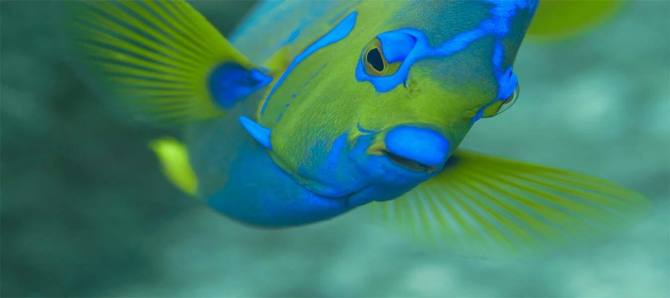slider-fish6